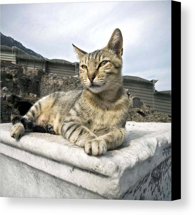Tabby Canvas Print featuring the photograph Queen Of Ephesus by Glennis Siverson