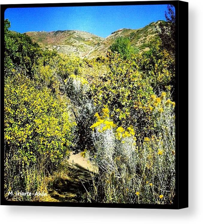 Salt Lake City Canvas Print featuring the photograph Yellow by Mily Iriarte