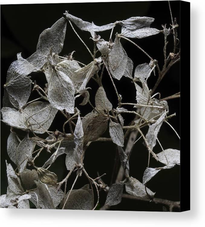 Autumn Canvas Print featuring the photograph Feeling #03 by Alexander Svetlov