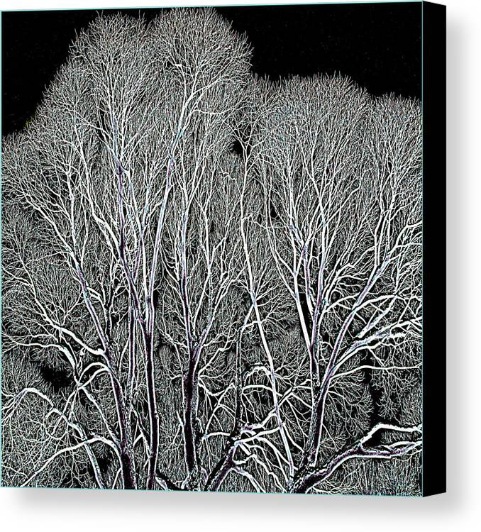 Landscape Canvas Print featuring the photograph Trees by Vladimir Kholostykh
