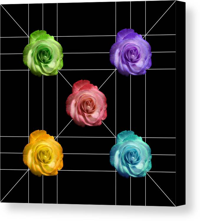 A Rose Is A Rose Canvas Print featuring the photograph A Rose Is A Rose Is A Rose by Peter Piatt