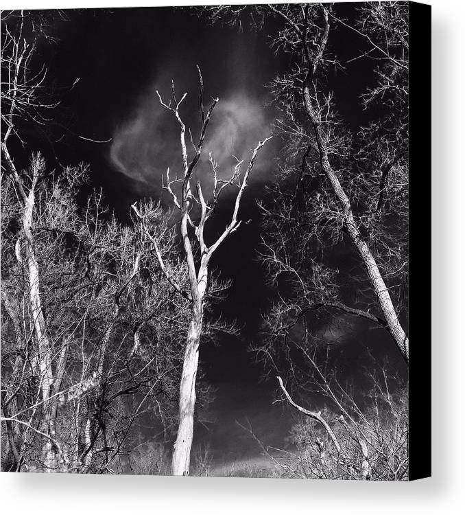 Trees Canvas Print featuring the photograph Alone by Erin Townsend