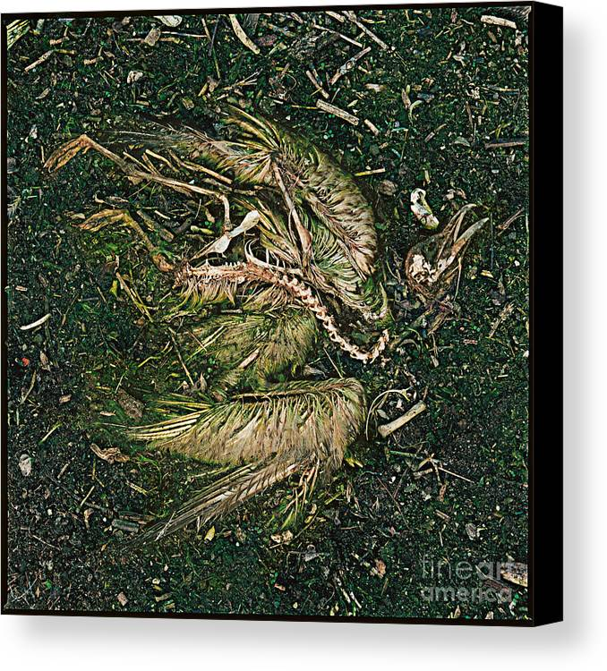 Bird Feather Green Born Closeup Canvas Print featuring the photograph Bone Feather And Green by Ty Lee