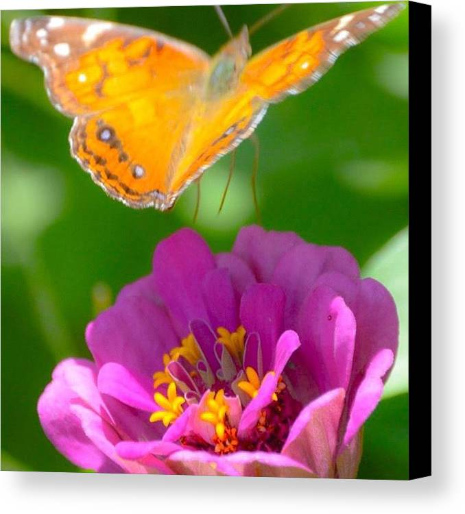 Flowers Canvas Print featuring the photograph Butterfly by Christine DuMouchel