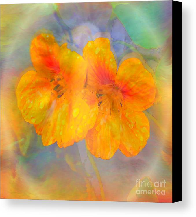 Nasturtiums Canvas Print featuring the painting Celebration Of Life. by Glenyss Bourne