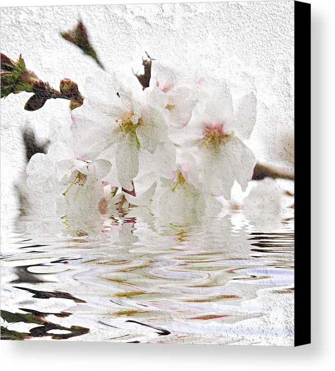 Blossom Canvas Print featuring the photograph Cherry Blossom In Water by Elena Elisseeva