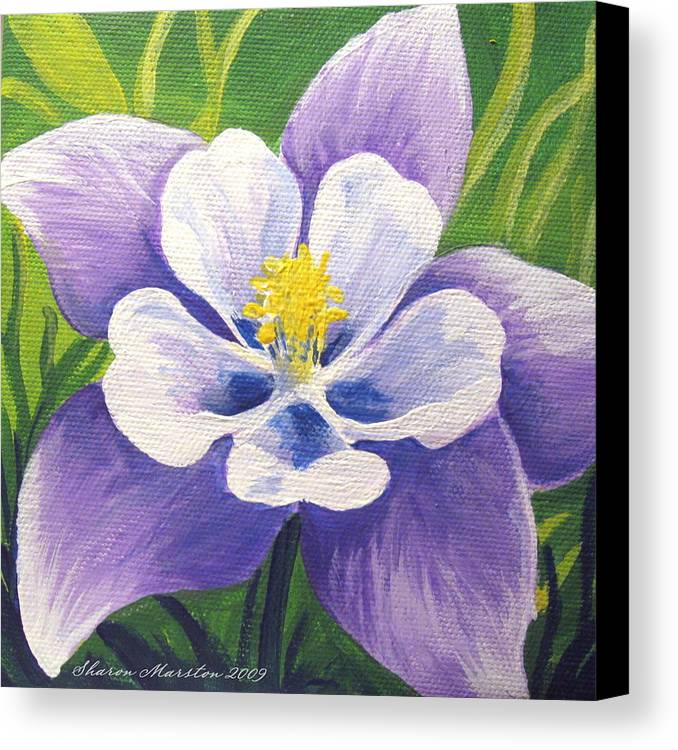 Columbine Canvas Print featuring the painting Colorado Columbine by Sharon Marcella Marston