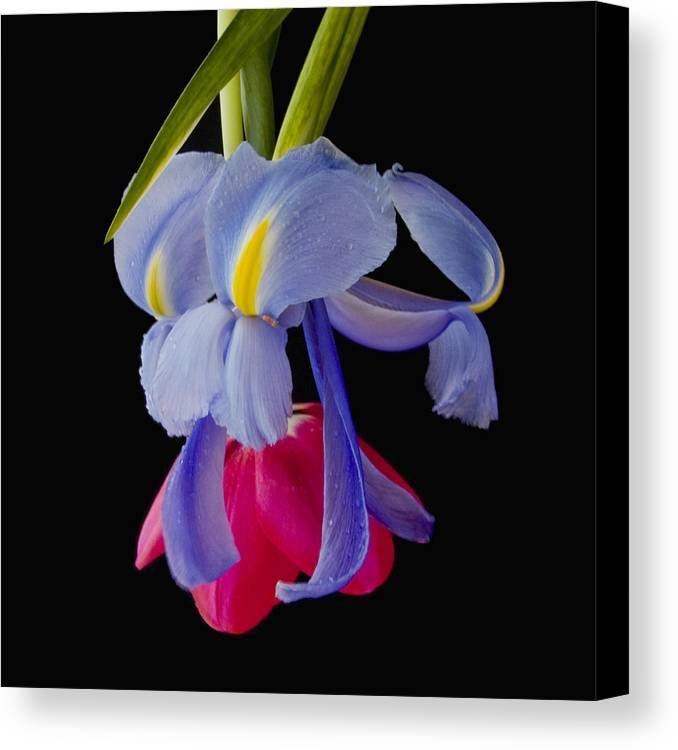 Flower Canvas Print featuring the photograph Downward Dog by Katherine Morgan