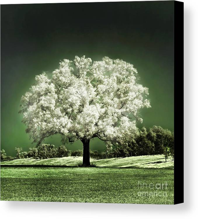 Baby Oak Tree Emerald Meadow Hugo Cruz Infrared Ir Fine Art Photography Infra Red Glowing Magical Ethereal Life Passion Nature Green Grass Jade Magnolia Cherry Blossom Canvas Print featuring the photograph Emerald Meadow Square by Hugo Cruz