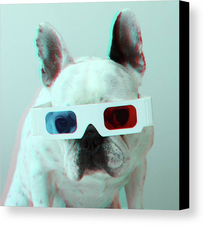 Square Canvas Print featuring the photograph French Bulldog With 3d Glasses by Retales Botijero
