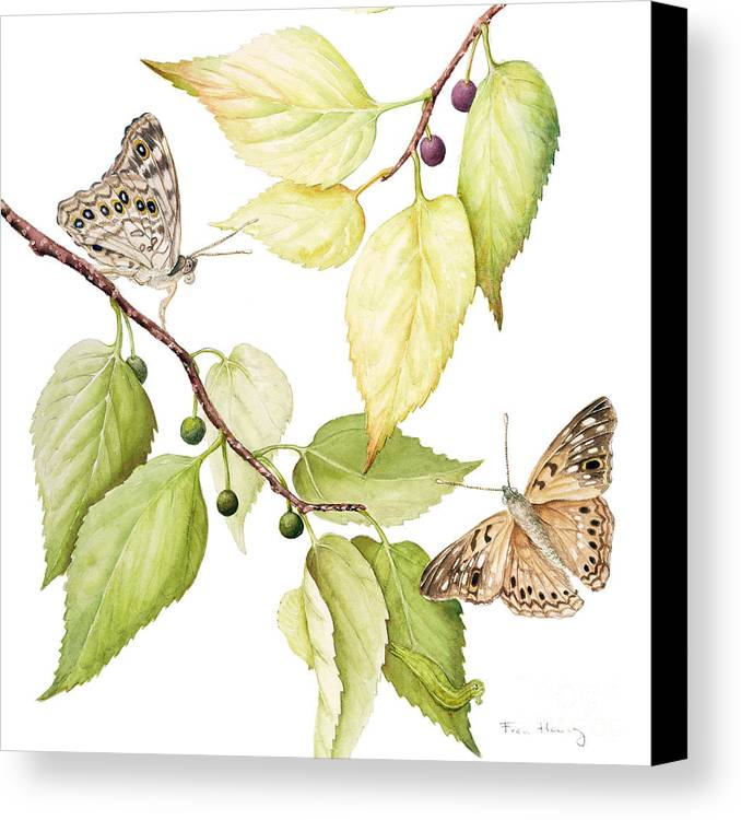 Butterfly Canvas Print featuring the painting Hackberry Emperor Butterfly by Fran Henig