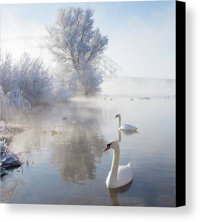 Square Canvas Print featuring the photograph Icy Swan Lake by E.M. van Nuil