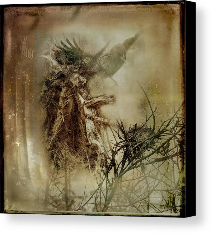 Woodlands Canvas Print featuring the photograph In The Wildwood by Susan Capuano