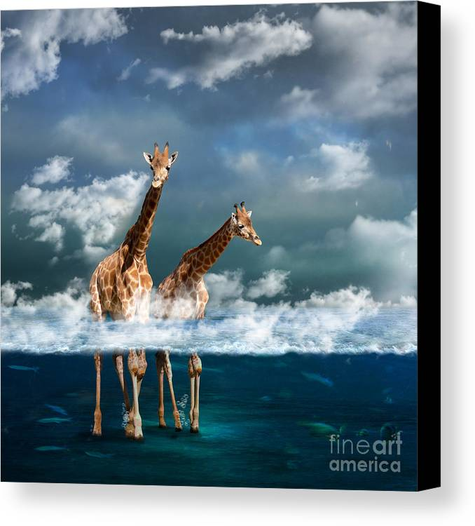 Sea Canvas Print featuring the photograph Misty by Martine Roch
