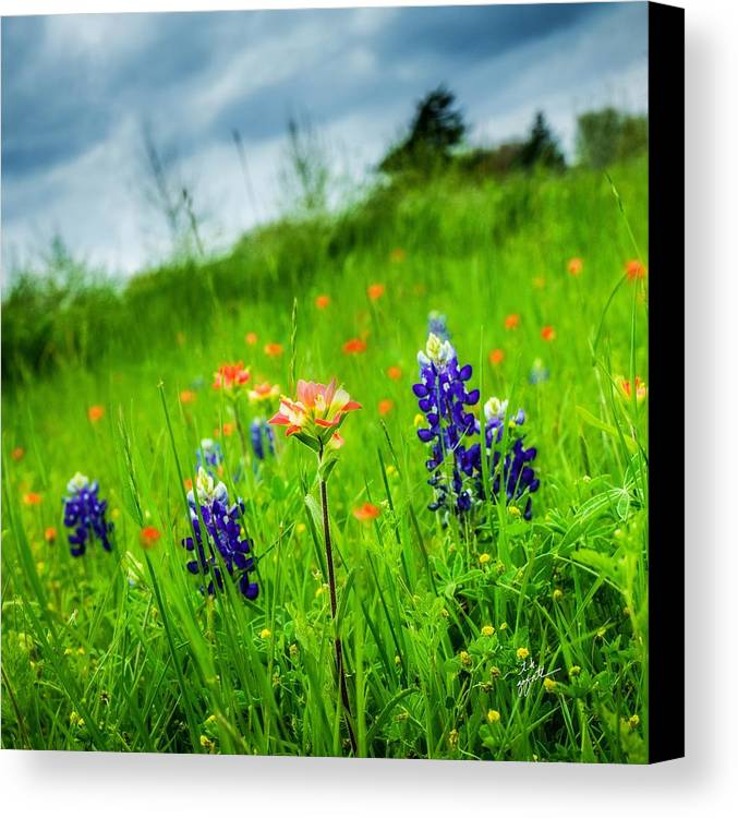 Indian Paintbrush Canvas Print featuring the photograph Paintbrush And Bonnets Square by TK Goforth