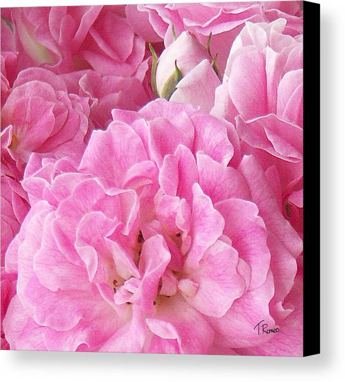 Rose Canvas Print featuring the digital art Pink by Tom Romeo