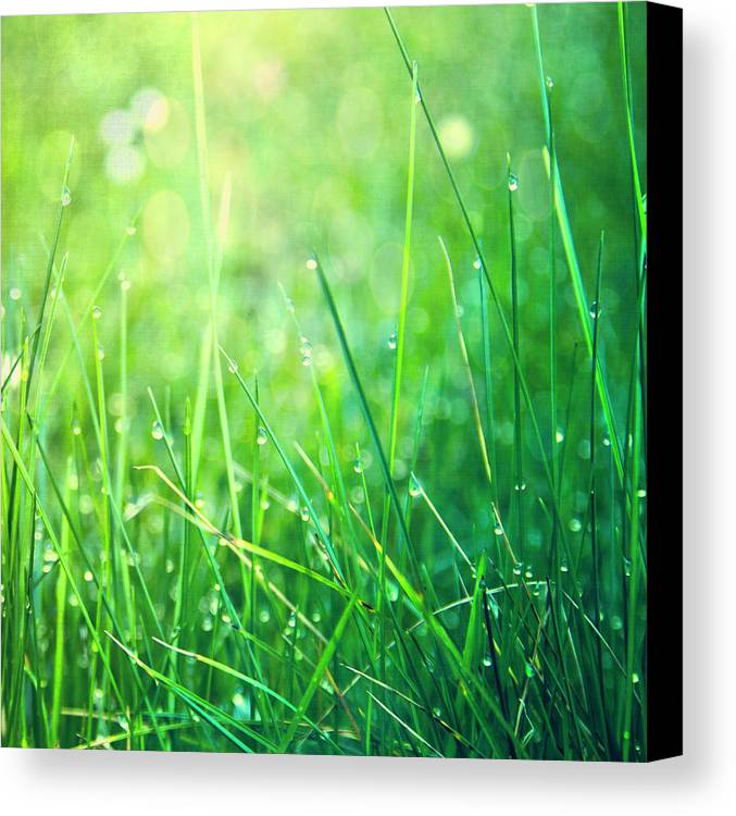 Square Canvas Print featuring the photograph Spring Green Grass by Dirk Wüstenhagen Imagery