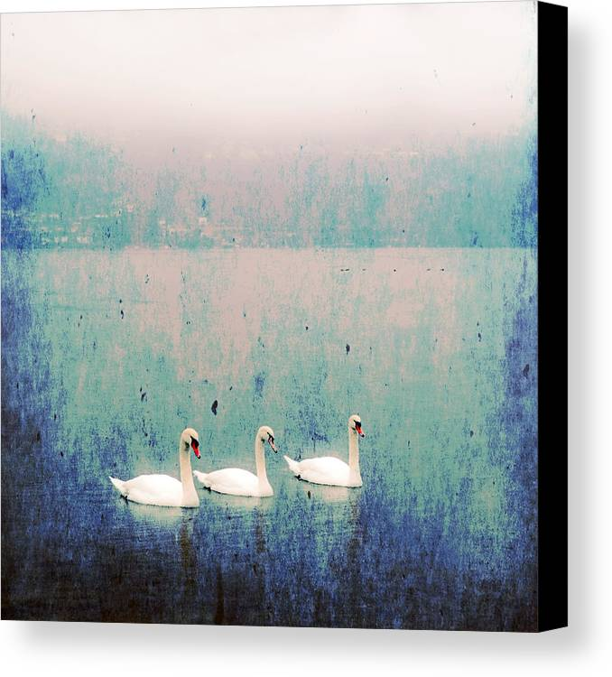 Swan Canvas Print featuring the photograph Three Swans by Joana Kruse
