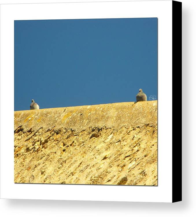 Birds Canvas Print featuring the photograph Together And Apart by Natural Meditation Art