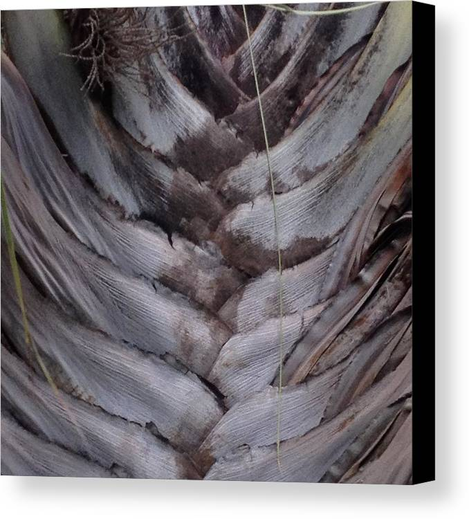 Palms Canvas Print featuring the photograph Triangle Palm 2 by Pamela Bushnell