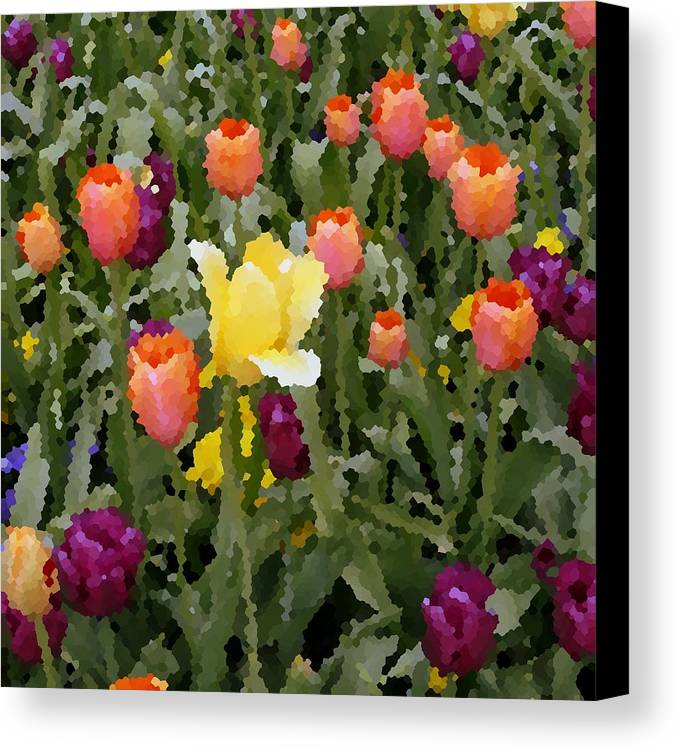 Tulips Canvas Print featuring the photograph Tulips by Rodger Mansfield