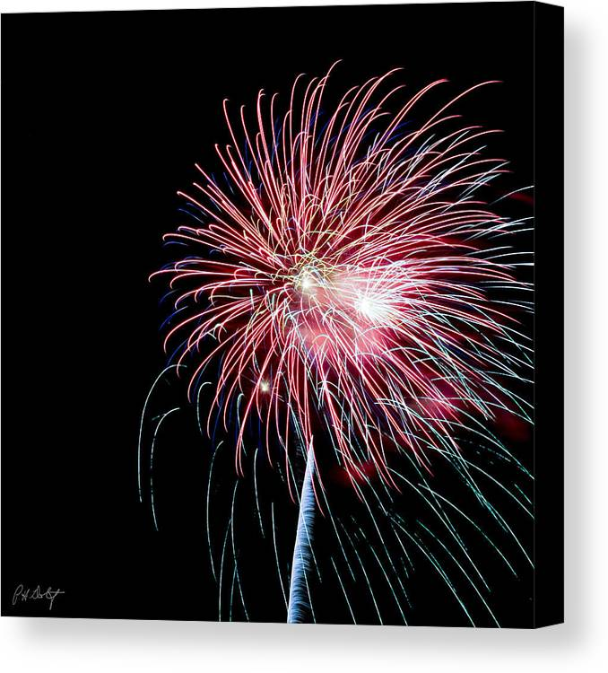July 4th Canvas Print featuring the photograph Wild Sky Flower by Phill Doherty