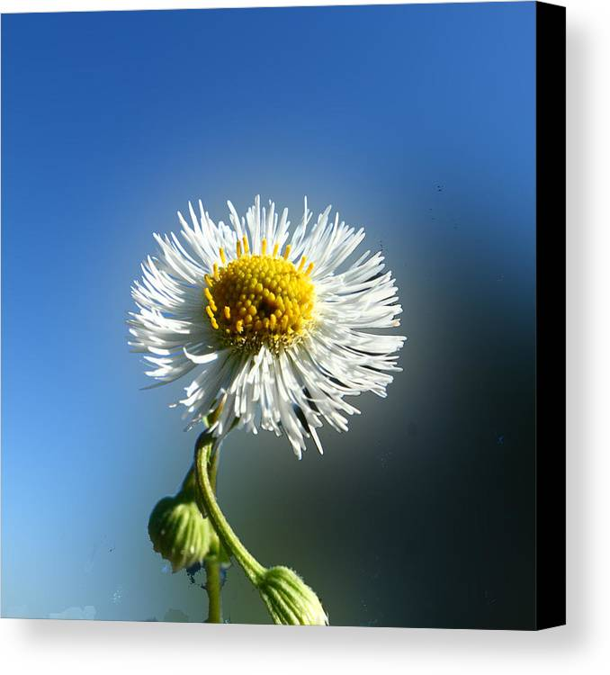 Botanica Canvas Print featuring the photograph Wildflower In The Wind 209 by David Houston