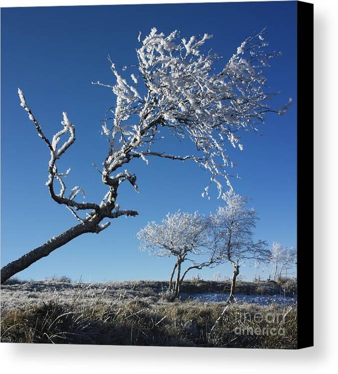 Bare Tree Canvas Print featuring the photograph Winter Tree. by Bernard Jaubert