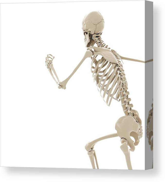 Artwork Canvas Print featuring the photograph Running Skeleton by Sciepro/science Photo Library