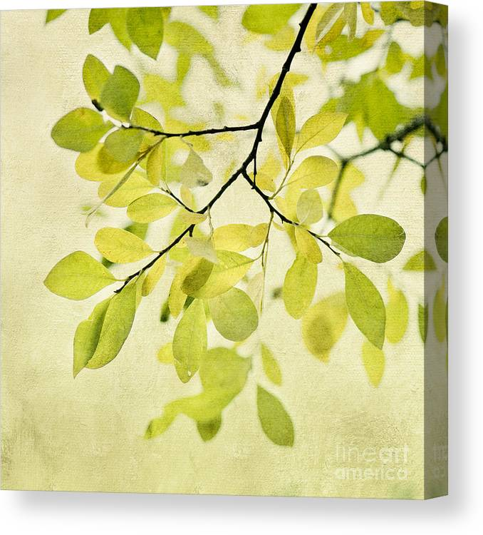 Foliage Canvas Print featuring the photograph Green Foliage Series by Priska Wettstein
