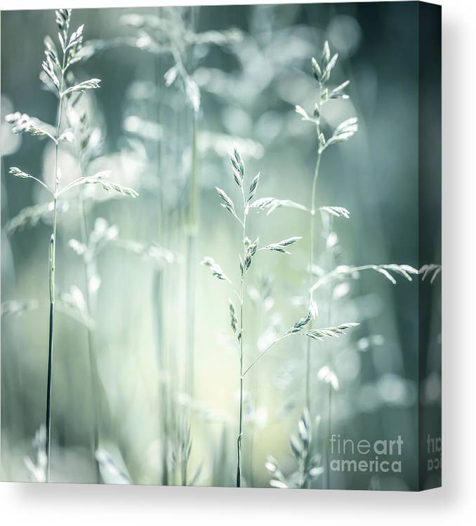 Green Canvas Print featuring the photograph June Green Grass Flowering by Elena Elisseeva