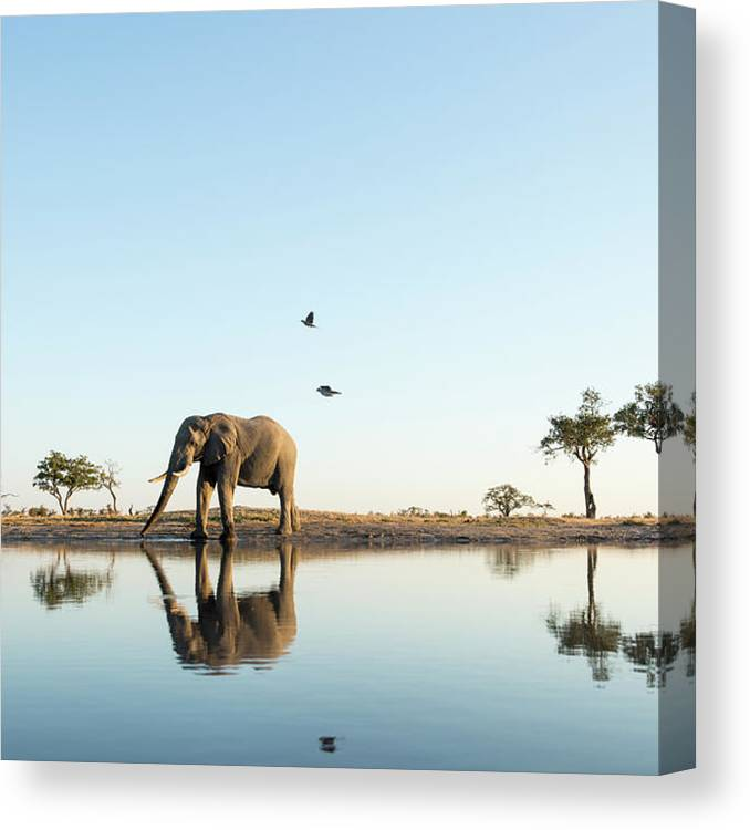 Tranquility Canvas Print featuring the photograph African Elephant At Water Hole, Botswana by Paul Souders