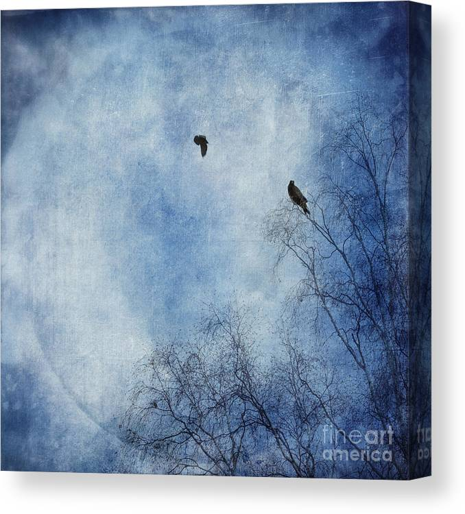 Dazzling Blue Canvas Print featuring the photograph Come Fly With Me by Priska Wettstein