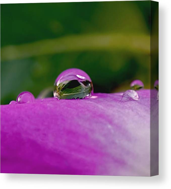 Fusion Canvas Print featuring the photograph Fusion by Rona Black