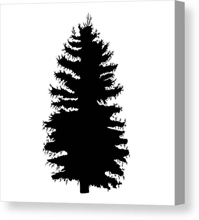 Hand Drawn Fir Tree Vector Illustration Silhouette Of Black Pine Tree Canvas Print