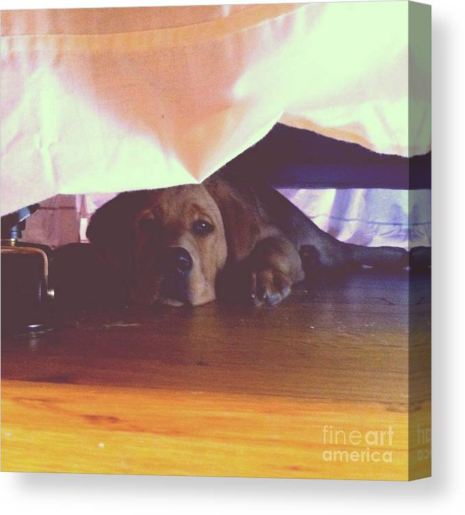 Dog Canvas Print featuring the photograph Hiding Under The Bed by Rachel Barrett