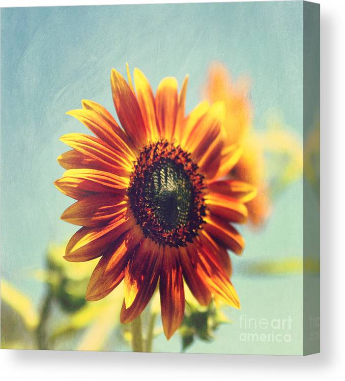 Sunflower Canvas Print featuring the photograph Lazy Days by Sylvia Cook