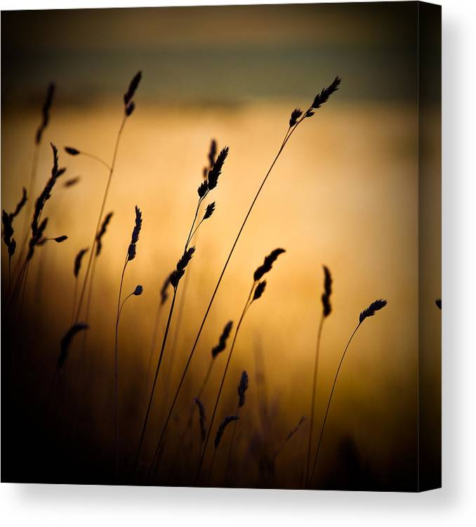 Filed At Sunset Canvas Print featuring the photograph The Field by Dave Bowman