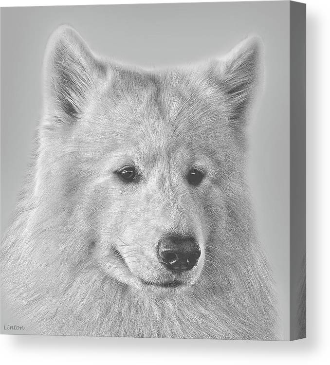 Samoyed Canvas Print featuring the digital art Samoyed by Larry Linton