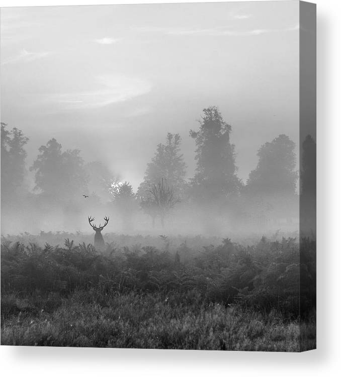Black And White Canvas Print featuring the photograph Greating The Sun by Irena Baker