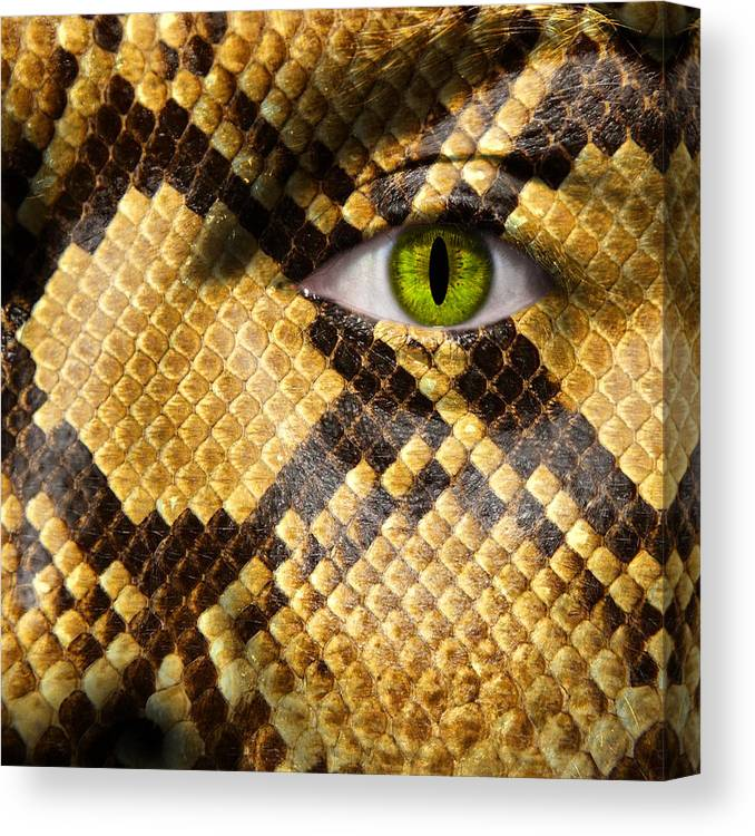 Amphibia Canvas Print featuring the photograph Snake Eye by Semmick Photo