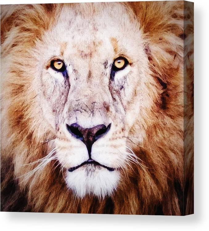 Lion Canvas Print featuring the photograph Strength by Marion McCristall