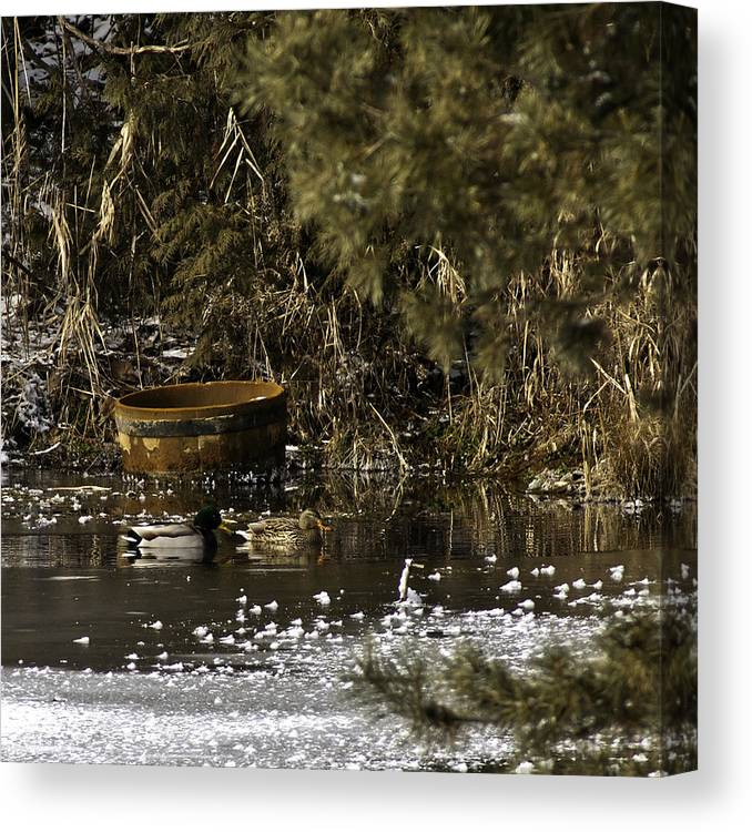 Canvas Print featuring the photograph Two Ducks And A Tub Square by LeeAnn McLaneGoetz McLaneGoetzStudioLLCcom