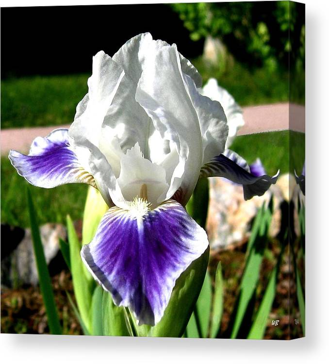 Iris Canvas Print featuring the photograph Iris Elegance by Will Borden