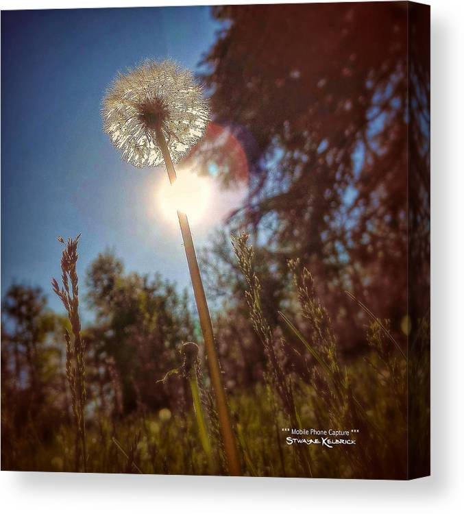 Flowers Canvas Print featuring the photograph A Shiny Flower Day by Stwayne Keubrick