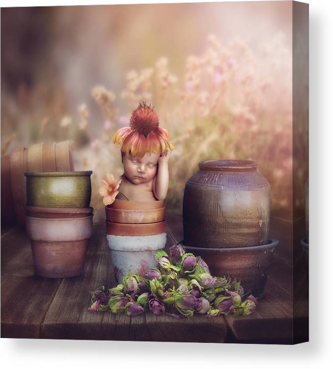 Flowers Canvas Print featuring the photograph Flower Baby by Cindy Grundsten