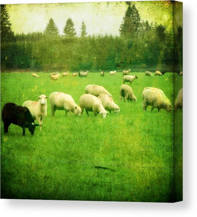Nature Canvas Print featuring the photograph Grazing by Cathie Tyler