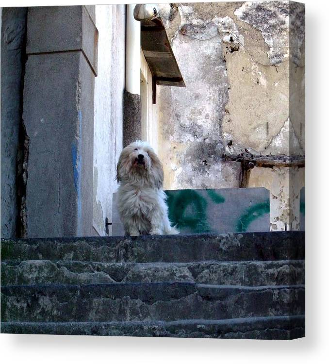 Capri Canvas Print featuring the photograph Italy's Capri Doggie by Mindy Newman