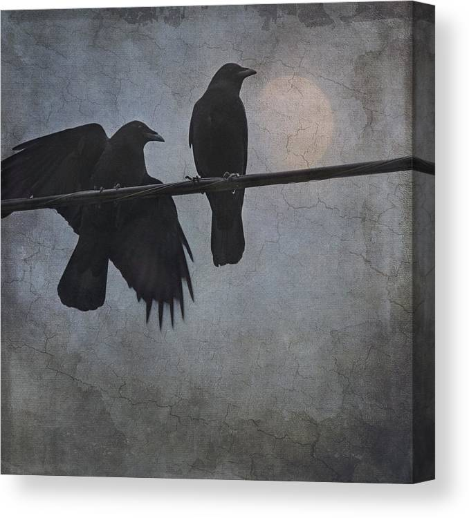 Crow Canvas Print featuring the photograph Night Watch by Sally Banfill