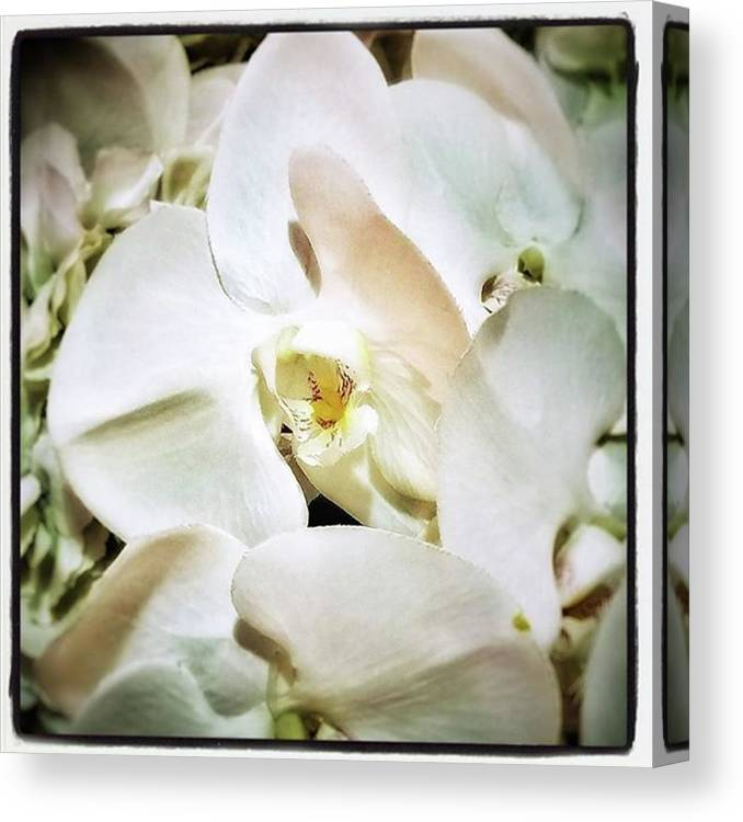 Dailyflower Canvas Print featuring the photograph Orchids For His Majesty. In Loving by Mr Photojimsf